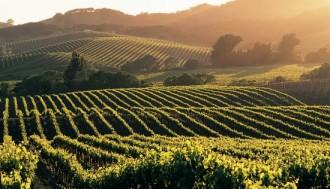 champagne-wijngaarden
